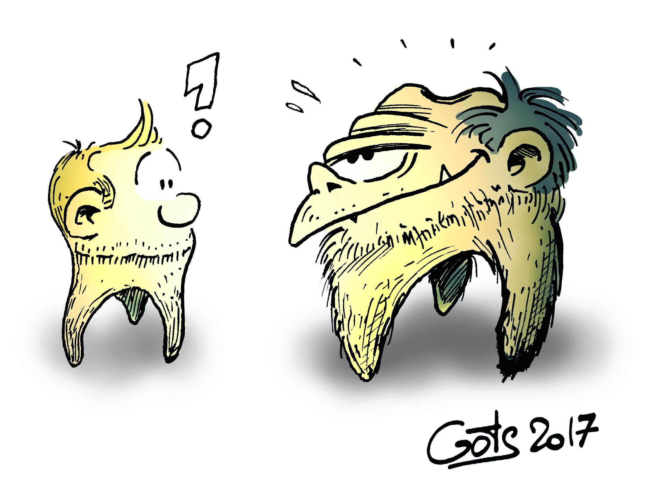 Molaires sapiens vs neand