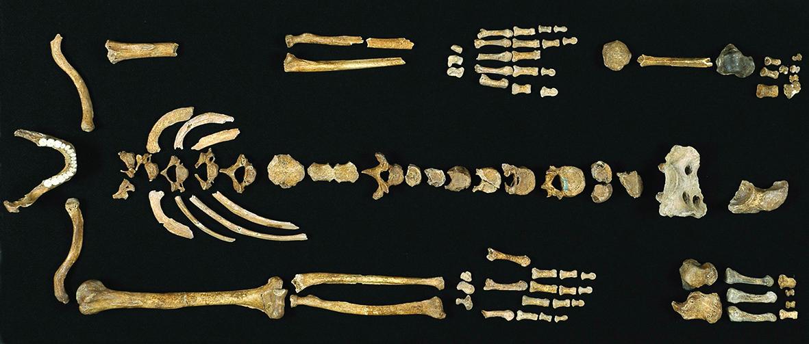 Regourdou squelette 2005